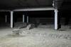 Resti di un antico complesso edilizio all'interno del parcheggio sotterraneo di corso XI Febbraio. Fotografia di Paolo Gonella, 2010. © MuseoTorino