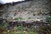 Resti fossili di vegetali lungo il torrente Stura di Lanzo presso Borgaro
