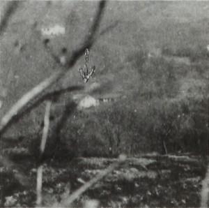 Villa Fiorini, già Vigna Bona