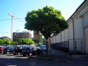 Il parcheggio che sorge sul luogo di sepoltura dei giustiziati. Fotografia di Silvia Bertelli.