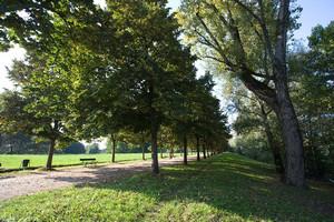 Uno dei sentieri del parco Colletta. Fotografia di Roberto Goffi, 2010. © MuseoTorino.