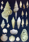 5-2,5 milioni di anni fa Emersione della collina torinese dal mare piemontese