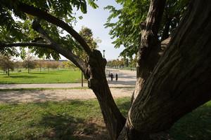 Scorcio del parco Cavalieri di Vittorio Veneto (già piazza d'Armi). Fotografia di Roberto Goffi, 2010. © MuseoTorino.