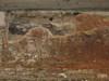 Tracce di intonaco sul tratto di muro nel parcheggio di piazza Emanuele Filiberto, © Soprintendenza per i Beni Archeologici del Piemonte e del Museo Antichità Egizie
