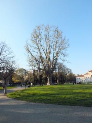 Parco della Tesoriera, albero secolare. Fotografia di Paola Boccalatte, 2014. © MuseoTorino