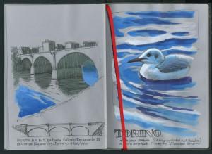 Lorenzo Dotti, Torino. Ponte Balbis, ex Ponte Vittorio Emanuele III, Giuseppe Pagano Pogatschnig 1926/1927. Gabbiano comune (Chroicocephalus ridibundus) in abito invernale. Fiume Po. Dicembre 2017, tempera e acquerello