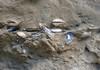 I fossili di mare medio-alto delle Sabbie di Asti