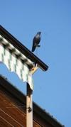 Dettaglio di un decoro presente sul tetto della cascina Falconera. Fotografia di Edoardo Vigo, 2012.