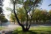 Parco Ruffini. Fotografia di Roberto Goffi, 2010. © MuseoTorino.