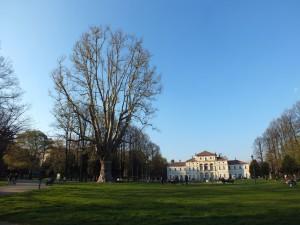 Parco della Tesoriera, albero secolare e villa. Fotografia di Paola Boccalatte, 2014. © MuseoTorino